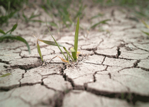 Dry Ground with Cracks and Grass
