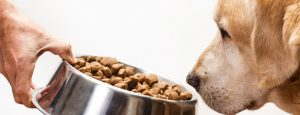 The-UK-dog-food-market